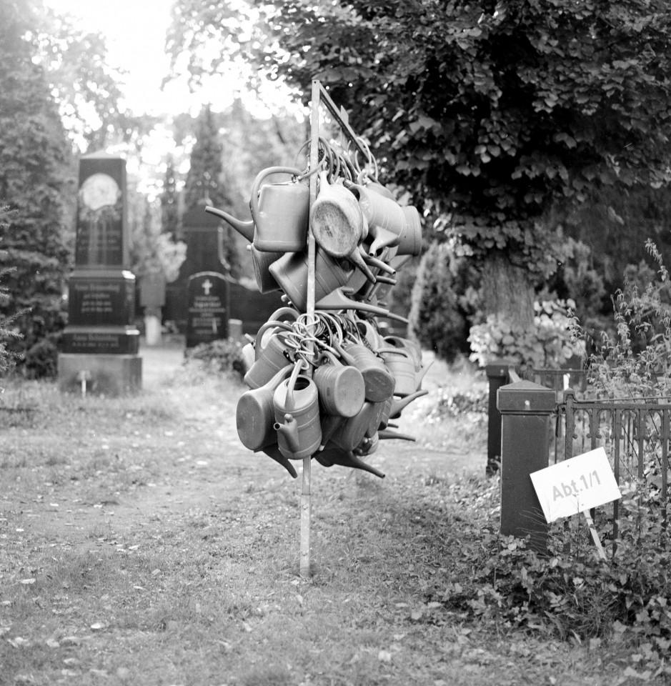 Gießkannenbaum